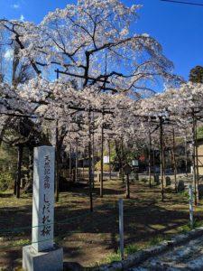 栃木の自然:宇都宮市八幡山周辺