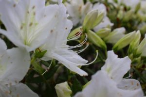 栃木の自然:おしらじの滝は幻の滝