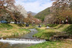 栃木の自然:亀ヶ城公園と観音寺川桜並木(県外編)