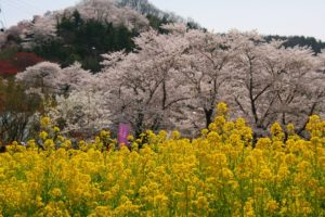 栃木の自然:花見山公園は桃源郷(近県編)