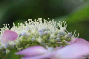 栃木の自然:つがの里はハスの時期がおすすめ