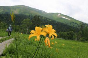 栃木の自然:久々の尾瀬も時間がないので山の鼻周辺散策