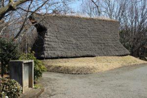 栃木の自然:根古屋台遺跡のニッコウキスゲとシャガ