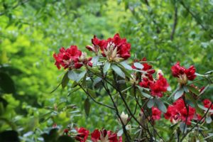 栃木の自然:大柿花山は季節の花がいい
