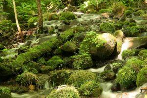 栃木の自然:尚仁沢湧水群はけがれなき自然
