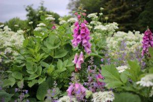 栃木の自然:壬生わんぱく公園は花満載
