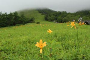 栃木の自然:霧降のニッコウキスゲ