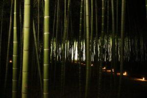 栃木の自然:若山農場の竹林