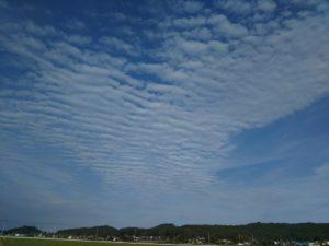 栃木の自然:益子のひまわり