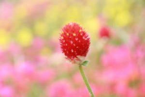 栃木の自然:わんぱく公園夏