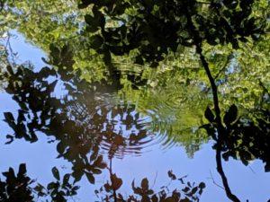 近県の自然:矢ノ原湿原