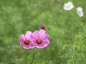 栃木の自然:宝積寺グリーンパーク2019