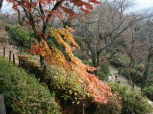 とちぎの自然:謙信平の紅葉