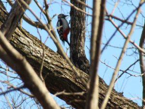 多くの野鳥に遭える白沢グリーンパーク