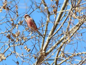野鳥の楽園:渡良瀬遊水地