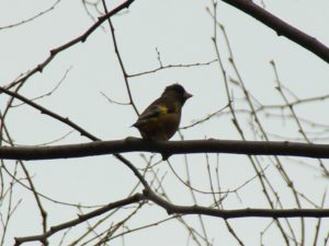今泉中央公園の鳥たち