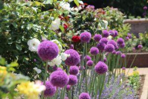 栃木の自然:コロナ自粛の心を癒すわんぱく公園2020