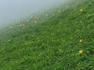 栃木の自然:霧降高原のニッコウキスゲ2020