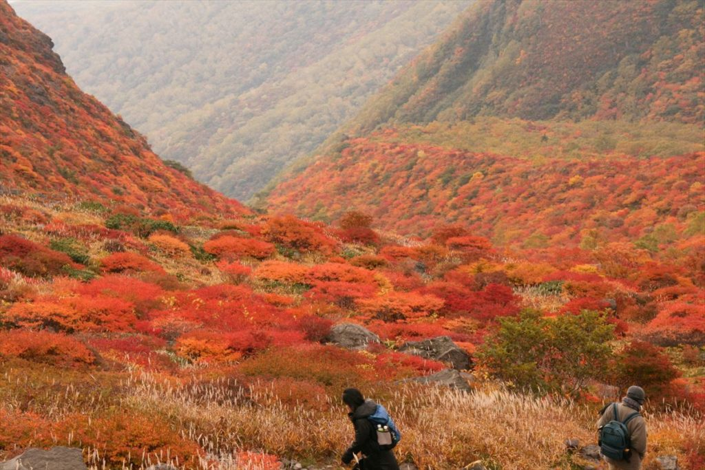 栃木の自然:那須岳の真っ赤な紅葉