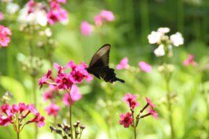 栃木の自然:栃木の山の花10選