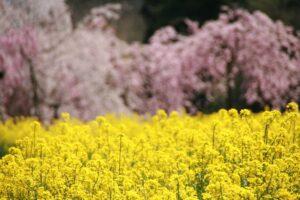 栃木の自然:栃木で見たい花ベスト10