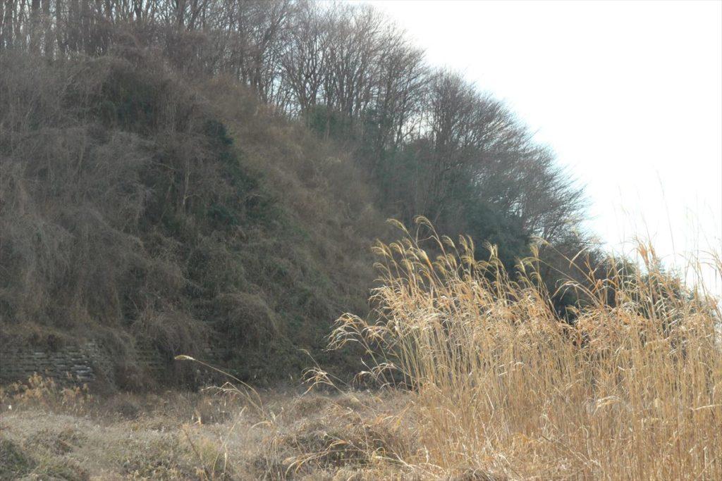 栃木の自然:鳥の楽園道場宿河畔
