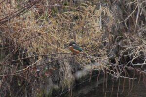 とちぎの自然:奈坪川は鳥の楽園