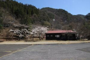 栃木の名所:足尾の銀山平のさくら