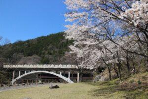 栃木の名所:花の渡良瀬公園